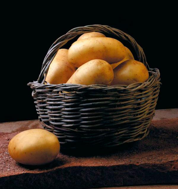 La patata nueva temprana es la primera que se produce en el año